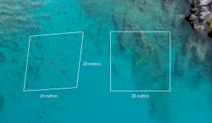 It's important to remember that underwater, to map out a square zone, perpendicular diagonals of the same length have to be used © Octopus Foundation