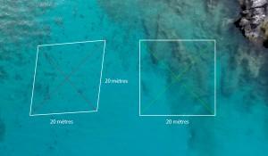 Attention, pour baliser un paysage sous-marin carré, il est nécessaire d'utiliser les diagonales qui doivent être de même longueur et perpendiculaires © Octopus Foundation