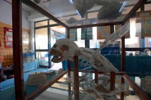 La clinique de Lampedusa compte aussi un centre d'information pour les touristes © Philippe Henry / Octopus Foundation