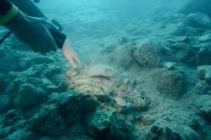 Les richesses historiques qui reposent sur les fonds marins dans la région de la cité d'Oricum sont nombreuses © Philippe Henry / Octopus Foundation