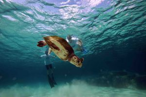 lampedusa-tortues