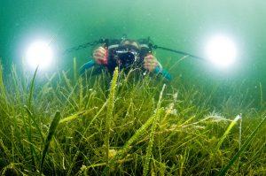Dans les eaux peu claires d'une lagune, un plongeur est à la recherche de Syngnathidés © Octopus Foundation