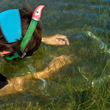 One way to assess the health of the seagrass is to verify its density in a quadrat of 0,1 square meter, built with PVC pipes © Octopus Foundation
