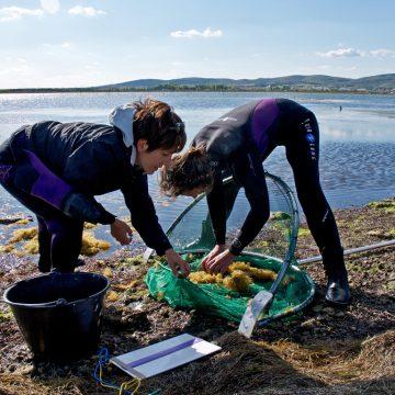 Après le trait de haveneau, le filet est ramené au bord pour permettre le tri rapide des poissons capturés, qui sont placés dans un seau avant d'être identifiés et mesurés. © LOUISY Patrick