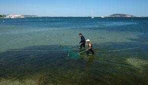 Les transects de pêche au haveneau consistent à pousser le filet sur une longueur de 10 m (marquée par une corde) pour quantifier les Syngnathidés présents dans la zone. © Octopus Foundation