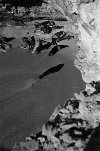 Sur la péninsule du Cap Blanc (Mauritanie), une importante colonie de phoques moines de Méditerranée pouvait être photographiée. Une petite colonie y est toujours installée aujourd'hui © Eugenio Morales Agacino's Photographic Archive