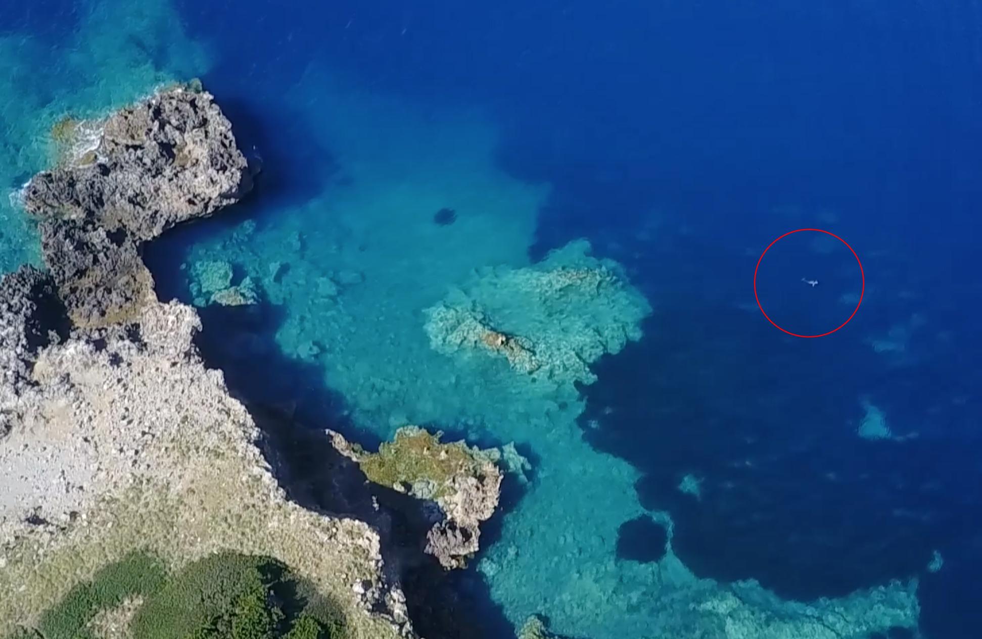 En 2017, l'un des pilotes de drones de la Fondation Octopus a pu tester la localisation d'un phoque moine depuis un quadricoptère. Le phoque n'a montré aucun signe de dérangement ou d'agacement. © Octopus Foundation
