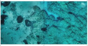 Underwater orthophotoplan, a scientific tool of centimetric accuracy © Octopus Foundation