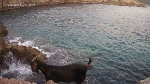 The area proved to be visited by many goats, some of which damaged our prototype © Octopus Foundation