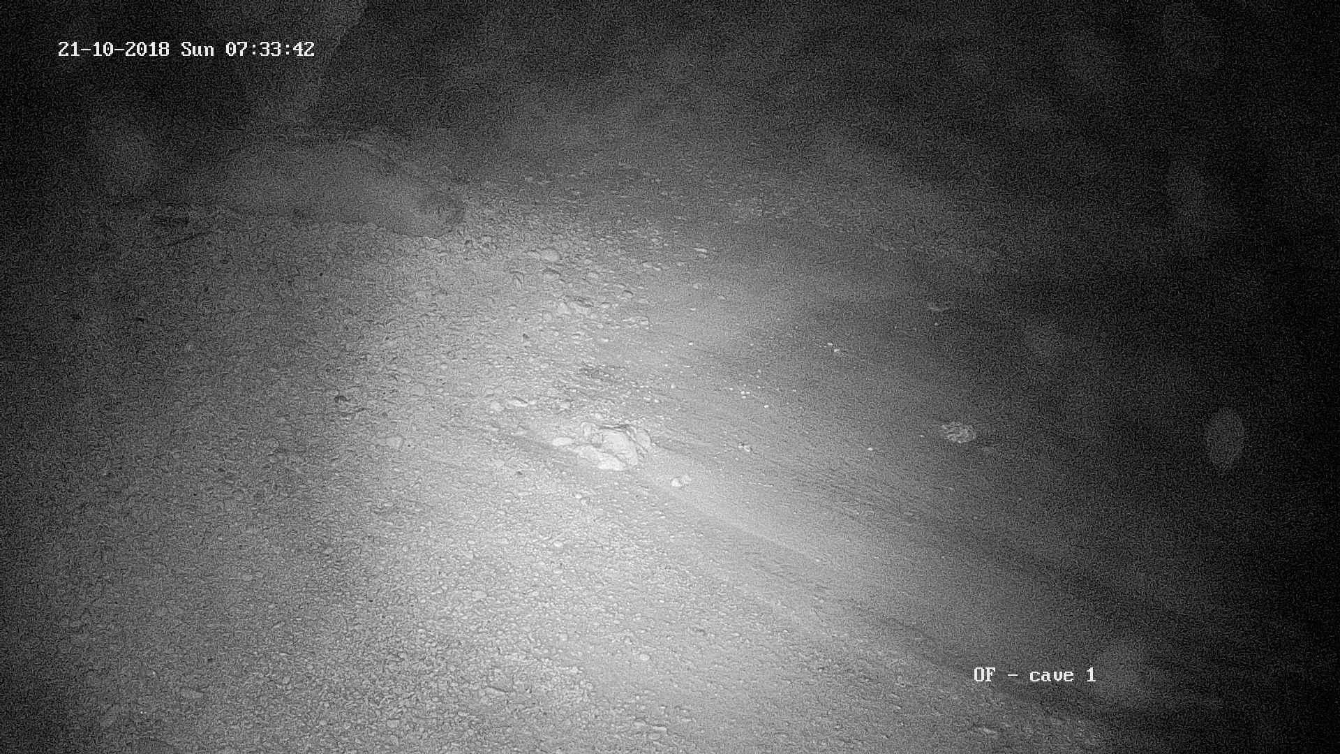 Lors d'une tempête avec des vents violents et une mer déchaînée, un phoque est venu se reposer dans la grotte du SET 1 © Octopus Foundation