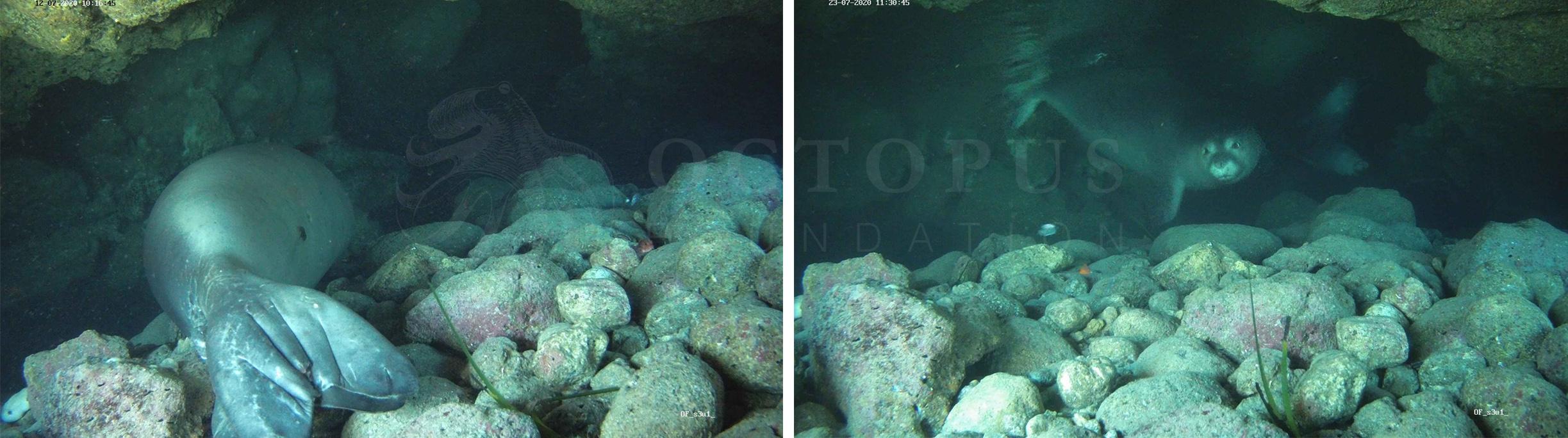 Quelques jours après l'installation de la caméra sous-marine, ces images étaient automatiquement transmises sur nos serveurs © Fondation Octopus